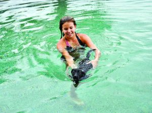 teaching dog to swim
