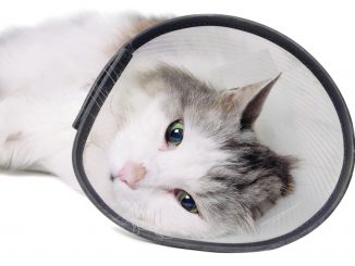 """Cat wearing a protective """"Elizabethan"""" collar"""
