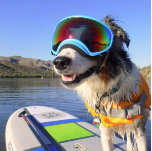 Rex Specs on dog