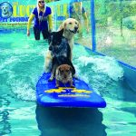 Dogs practicing on surf board