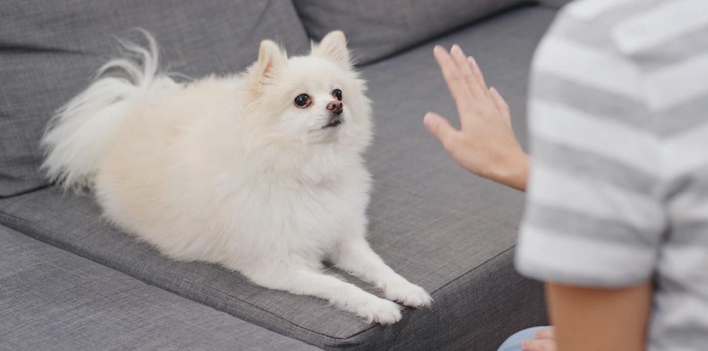 Couch Potato Training Pet Companion Magazine
