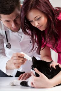 Vets treating a cat's ear infection