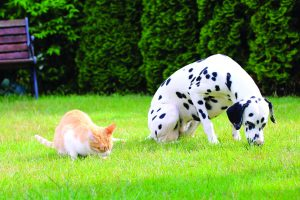 Dog and cat eating grass